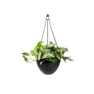 marble+hanging plant Poto